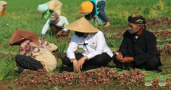Dani Ramdan Hadiri Panen Bawang Merah di Desa Sukahurip Sukatani
